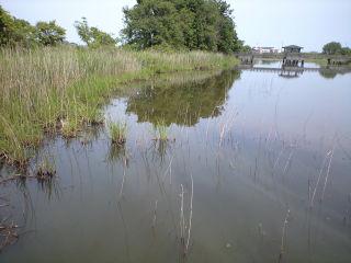 琵琶湖周辺の沼